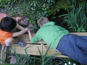 Nell's friends Lucas and Nat look for newts in our garden pond.