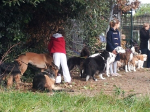 Perhaps it's time to focus on action in the dog creche? (This one is at the Hampstead Heath farmers' market). Honest.