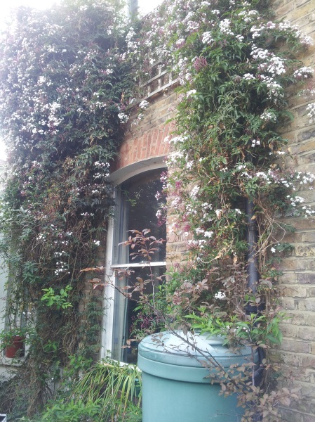 Flowering jasmine makes the street and house smell sweet.