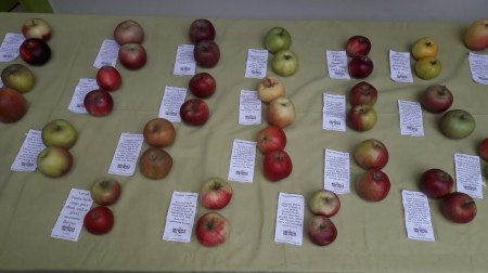 Apple Day activities at Gillespie Park have to be all about apples. I ran an apple bobbing stall and a nature pendant stall which got kids to decorate air dryed clay with leaves, sticks and seeds.